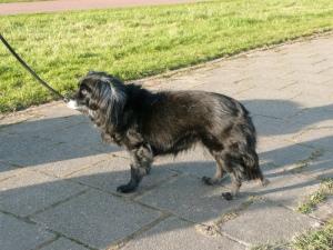 Honden_in_de_oudorperpolder_044